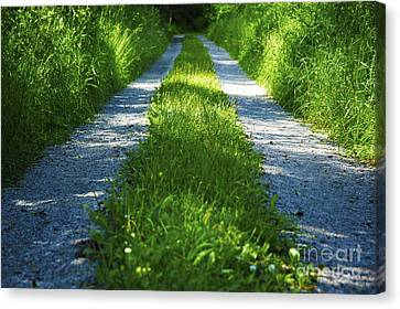 Swedish Road In Summer 1 Canvas Print by Micah May