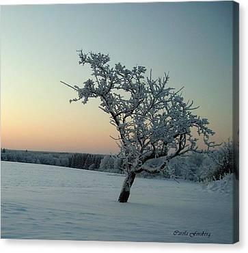 Swedish Winter Canvas Print by Carola Ann-Margret Forsberg