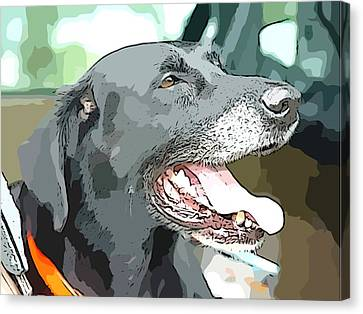 Sweet Amos Canvas Print by Alice Gipson