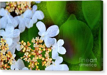 Canvas Print featuring the photograph Sweet And Sour by Darla Wood