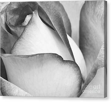 Sweet Black And White Rose  Canvas Print by Sabrina L Ryan