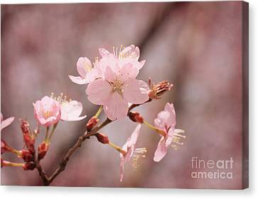 Sweet Blossom Canvas Print by LHJB Photography