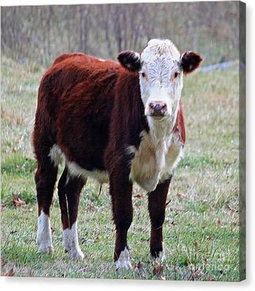 Sweet Bovine Face In Pastel Canvas Print by Suzanne Gaff