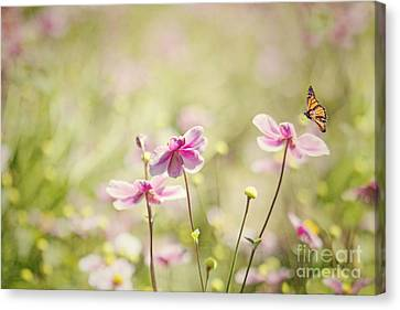 Sweet Butterfly Garden Canvas Print