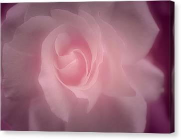 Delicate Canvas Print - Sweet Caress by The Art Of Marilyn Ridoutt-Greene