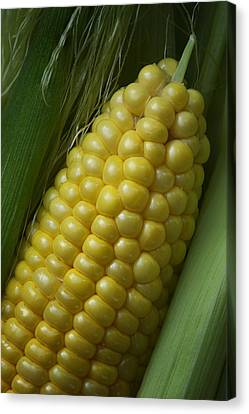 Sweet Corn - On The Cob Canvas Print