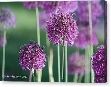 Canvas Print featuring the photograph Sweet Dreams by Ann Murphy