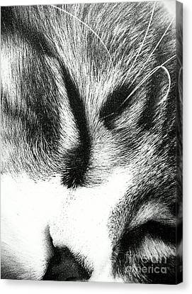 Canvas Print featuring the photograph Sweet Dreams by Jacqueline McReynolds