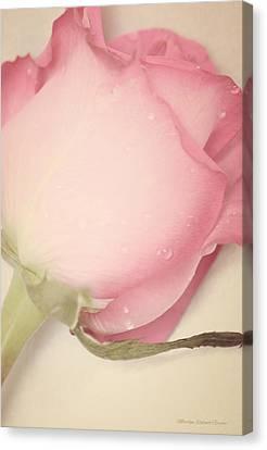 Sweet Gentleness Canvas Print by The Art Of Marilyn Ridoutt-Greene