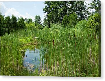 Sweet Grass Gardens Nursery Carries Canvas Print by Angel Wynn
