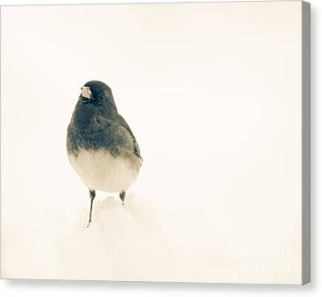 Sweet Junco Canvas Print by Cheryl Baxter