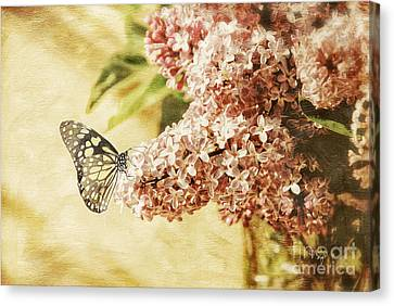 Sweet Lilacs Canvas Print by Lois Bryan