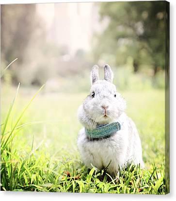 Sweet Little Bunny Canvas Print by Vicki Jauron