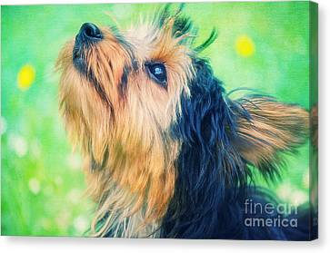 Sweet Little Dog Canvas Print by Angela Doelling AD DESIGN Photo and PhotoArt