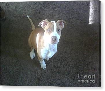 Sweet Nala Canvas Print by Jeff Pickett