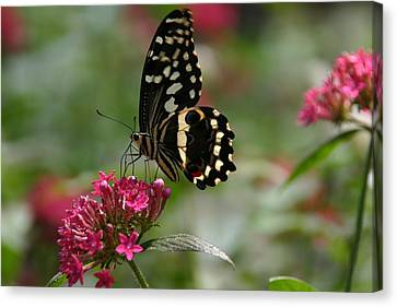 Canvas Print featuring the photograph Sweet Nectar by Denyse Duhaime