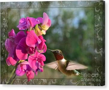 Sweet Pea Hummingbird IIi Canvas Print by Debbie Portwood