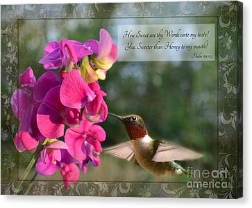 Sweet Pea Hummingbird Iv With Verse Canvas Print by Debbie Portwood