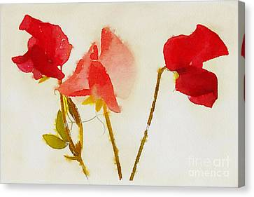 Sweet Pea Watercolour Canvas Print by John Edwards