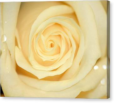 Sweet Pearl Canvas Print by The Art Of Marilyn Ridoutt-Greene