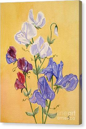 Sweet Peas Canvas Print by Yvonne Johnstone