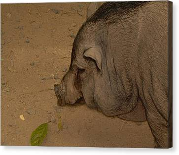 Canvas Print featuring the photograph Sweet Pig by Victoria Lakes