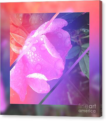 Sweet Pink Wild Rose With Dew Drops Canvas Print by Beverly Claire Kaiya