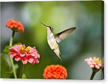 Canvas Print featuring the photograph Sweet Promise Hummingbird by Christina Rollo