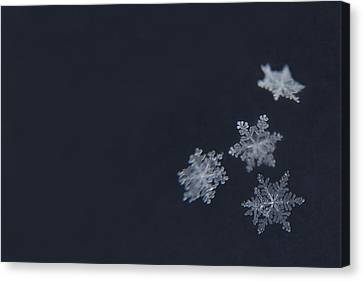 Snowflake Canvas Print - Sweet Snowflakes by Carrie Ann Grippo-Pike