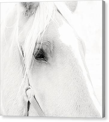 Sweet Soul Belgian Horse Black And White Canvas Print by Terry DeLuco