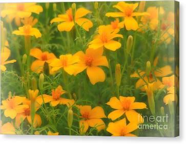 Sweet Summer Marigolds Canvas Print