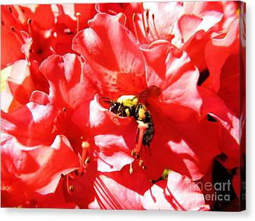 Canvas Print featuring the photograph Sweet Surrender by Robyn King