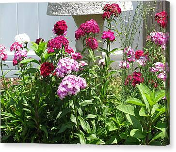Canvas Print featuring the photograph Sweet William Flowers by Margaret Newcomb