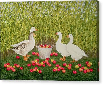 Sweetcorn Geese Canvas Print by Ditz
