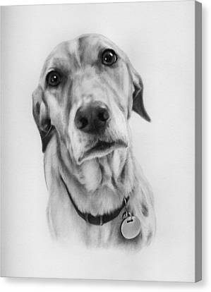 Canvas Print featuring the drawing Sweetheart by Natasha Denger