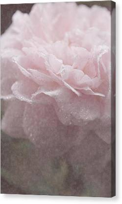 Sweetly Pink Canvas Print by The Art Of Marilyn Ridoutt-Greene