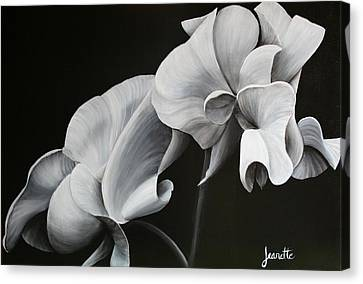 Sweetpea Blossoms Canvas Print