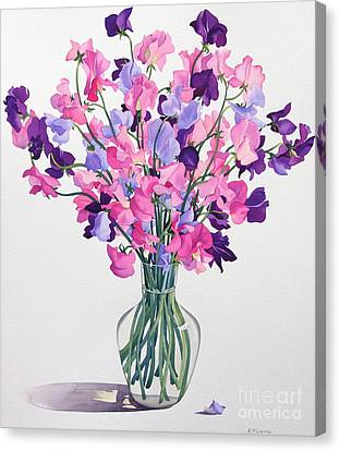 Horticultural Canvas Print - Sweetpeas by Christopher Ryland