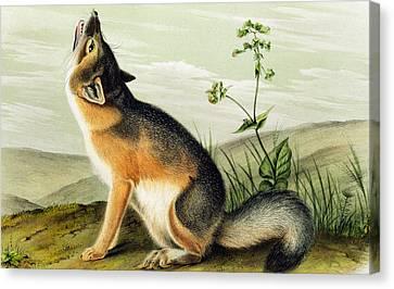 Swift Fox Canvas Print by John James Audubon