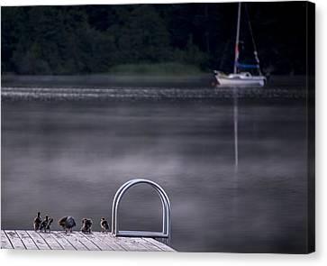 Swim Or Sail Canvas Print