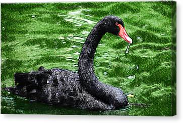 Swimming A Black Swan Canvas Print by Lanjee Chee
