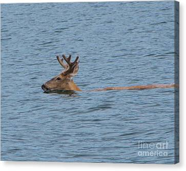 Swimming Deer Canvas Print by Leone Lund