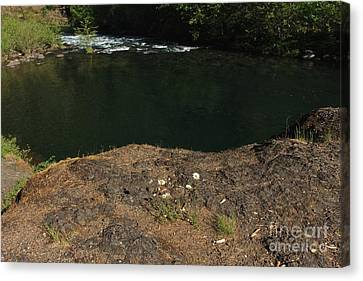 Swimming Hole  Canvas Print by Tim Rice