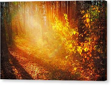 Swimming In Golden Light Canvas Print by Jenny Rainbow