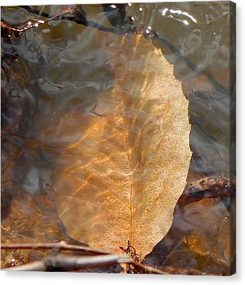 Canvas Print featuring the photograph Swimming Leaf by Candice Trimble