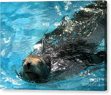 Canvas Print featuring the photograph Swimming Sea Lion by Kristine Merc