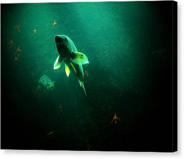 Canvas Print featuring the photograph Swimming Toward The Light by Micki Findlay