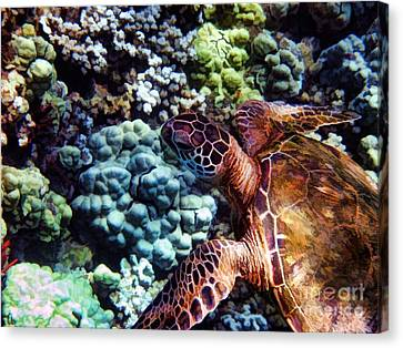 Swimming With A Sea Turtle Canvas Print by Peggy Hughes