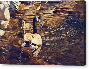 Mother Goose Canvas Print - Swimming With Mom by Maria Angelica Maira