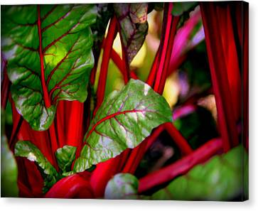 Swiss Chard Forest Canvas Print by Karen Wiles